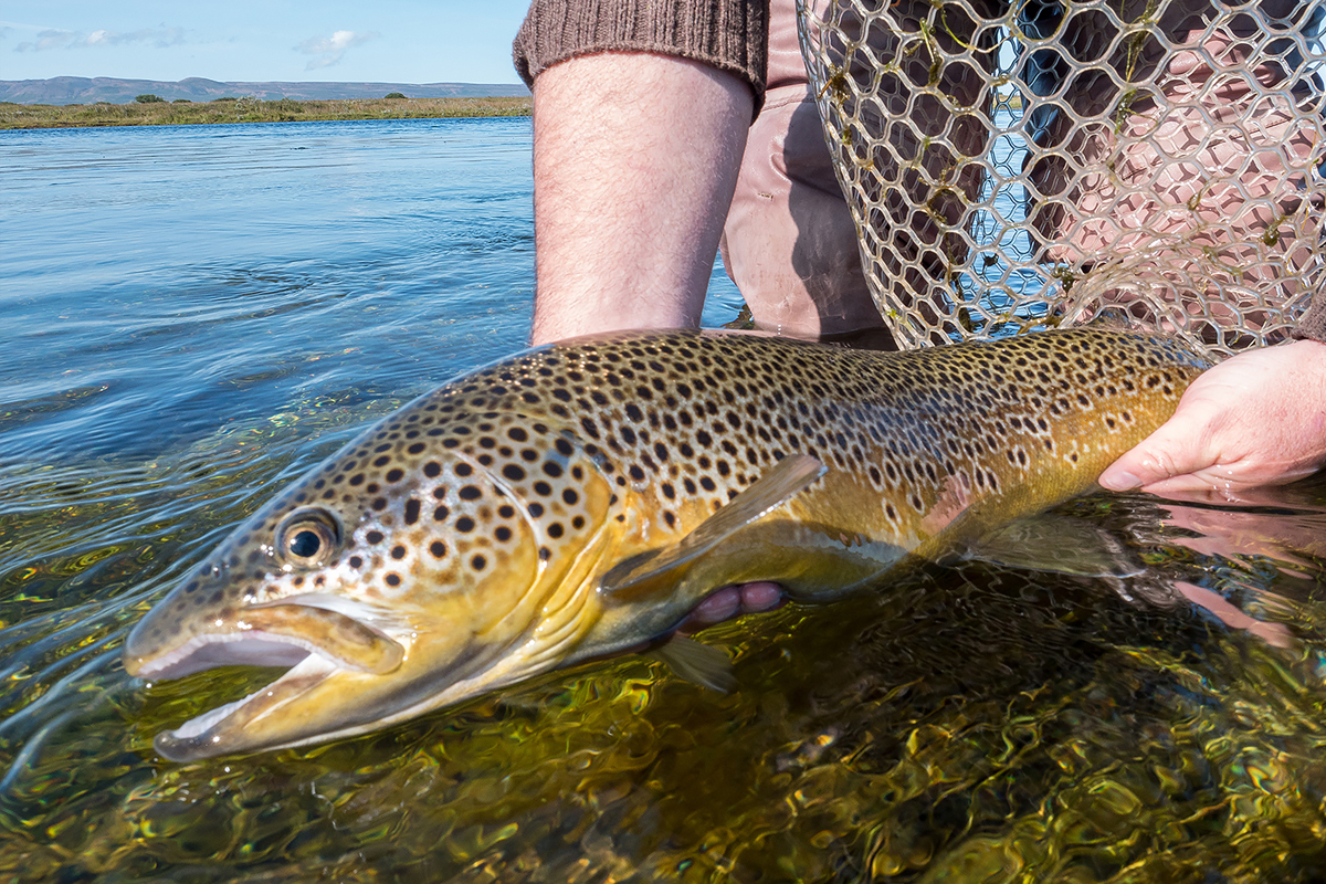 Iceland fly fishing adventure travel tips