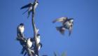 Patagonia fly fishing road trip Lago Yelcho birds